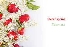 Strawberries with flowers of bird cherry on a white background. Sunny spring background. Isolated. Border with the copy space. Stock Image
