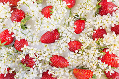 Strawberries with flowers of bird cherry on a white background. View from above. Sunny spring background. Pattern. Stock Photography