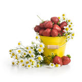 Strawberries and Flowers Stock Image