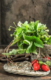 Strawberries, flowers and leaves over rustic background Stock Image
