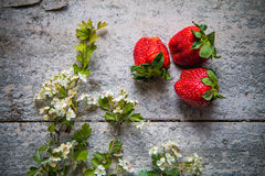 Strawberries with flowers Stock Photos
