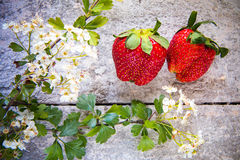 Strawberries with flowers Stock Image