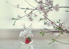 Strawberries and flowers Royalty Free Stock Photos