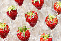 Strawberries in flute glasses Stock Image