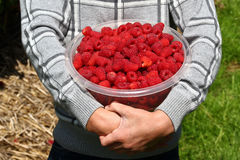 Strawberries. In the foreground hands holding a bowl of strawberries Royalty Free Stock Photo