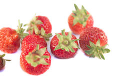 Strawberries fragaria ananassa isolated Royalty Free Stock Images