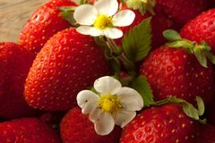 Strawberries always fresh and healthy. Fresh strawberries with white  flower Stock Photos