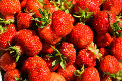 Strawberries. Fresh and new strawberries in close up Royalty Free Stock Photo