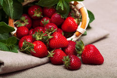 Strawberries. Fresh organic strawberries on a tablecloth Stock Images