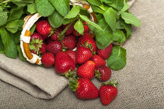 Strawberries. Fresh organic strawberries on a tablecloth Royalty Free Stock Image