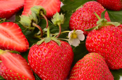 Strawberries. Fresh strawberry as a background close-up Stock Photo