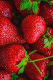 Strawberries. Fresh sweet strawberries; summer cravings Stock Photos