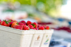 Strawberries. On a fruit market stand stock image