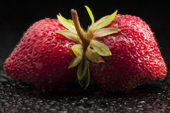 Strawberries, fruit, red, macro, minimalist, wet,. Two ripe strawberries on wet and black background in studio. Close-up very appetizing.  Dew and droplets Royalty Free Stock Photo