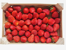 Strawberries fruits Royalty Free Stock Photography