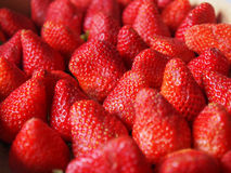 Strawberries fruits Royalty Free Stock Images