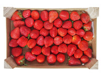 Strawberries fruits Royalty Free Stock Image