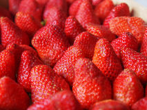 Strawberries fruits Royalty Free Stock Photo
