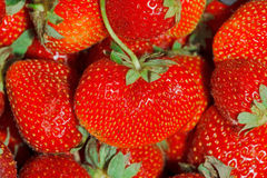 Strawberries Full Frame Background Royalty Free Stock Photography