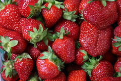 Strawberries Galore! Royalty Free Stock Photography