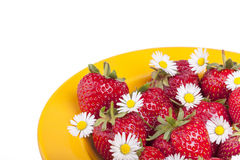 Strawberries - garnished with daisy flowers Stock Images