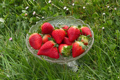 Strawberries in Glass Fruit Bowl in Green Grass Stock Photography