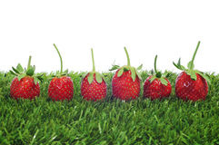 Strawberries on the grass Stock Images