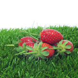 Strawberries on the grass Royalty Free Stock Photo