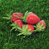 Strawberries on the grass Royalty Free Stock Images
