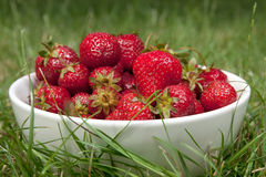 Strawberries on a grass Royalty Free Stock Photography
