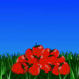 Strawberries on the grass royalty free illustration