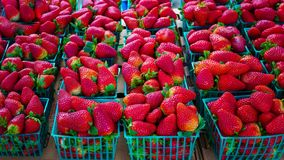 Strawberries in green baskets. Ripe strawberries in green basket for sale stock image