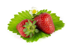 Strawberries on green leaf isolated on white Royalty Free Stock Photography