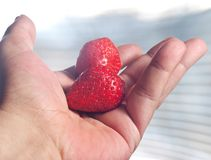Strawberries in hand Royalty Free Stock Photo