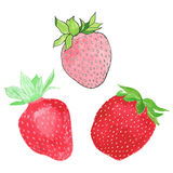 Strawberries. Hand-drawn berries. Real watercolor drawing. Vector illustration. vector illustration