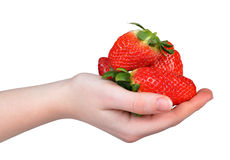 Strawberries in hand Royalty Free Stock Photos