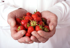 Strawberries in hands. Chef holding handful of colorful summer strawberries stock photography
