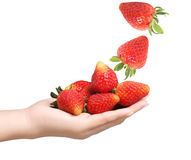 Strawberries in hands Royalty Free Stock Images