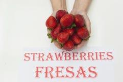 Strawberries on hands. Ripe strawberries on white background, strawberries on hands Stock Images