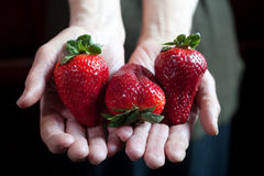 Strawberries in the hands Stock Photo