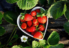 Strawberries in heart shape bowl Stock Images