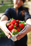 Strawberries in heart shape bowl Royalty Free Stock Photography