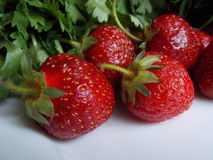 Strawberries with herbs, dill and parsley Stock Images