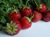 Strawberries with herbs, dill and parsley Stock Photography