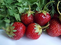 Strawberries with herbs Stock Photography