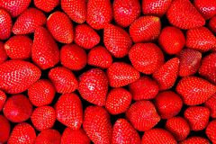 Strawberries II. A lot of fresh strawberries Stock Image