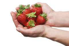 Strawberries In The Hand Royalty Free Stock Photo