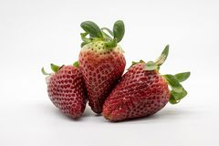 A hand full of strawberries royalty free stock images