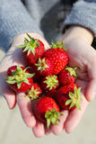 Strawberries on lady hand Royalty Free Stock Images