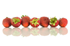 Strawberries laid in a row. Strawberries ripe laid in a row and it's reflection on white isolated background Royalty Free Stock Image